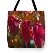 Fall Dogwood Leaves Tote Bag