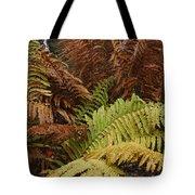 Fall Ferns Acadia National Park Img 6355 Tote Bag
