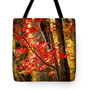 Fall Forest Detail Tote Bag