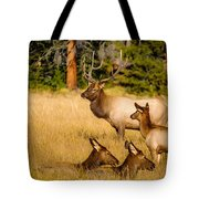Fall Is Family Time Tote Bag