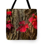 Fall Leaves Against Tree Trunk Tote Bag
