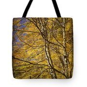 Fall Leaves And Trees In West Michigan No171 Tote Bag