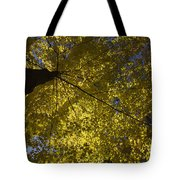 Fall Maple Tote Bag