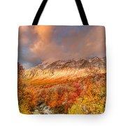 Fall On Display Tote Bag