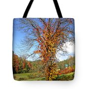Fall Trees 5 Of Wnc Tote Bag
