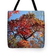 Fall Trees Of Wnc Tote Bag