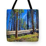 Fallen Sequoia In Mariposa Grove In Yosemite National Park-california Tote Bag