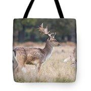 Fallow Deer Buck On Guard  Tote Bag