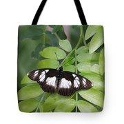False Diadem Butterfly Tote Bag