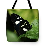 False Zebra Longwing Butterfly Tote Bag