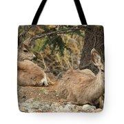 Family Nap Tote Bag