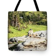 Family Picnic Tote Bag