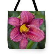 Fancy Red Wine Daylily Tote Bag
