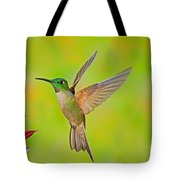 Fawn-breasted Brilliant Hummingbird Tote Bag