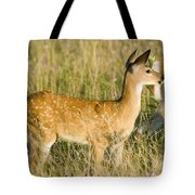 Fawn In Big Meadows Tote Bag