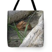 Fawn Resting On Beach Tote Bag