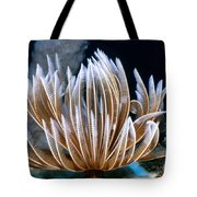Feather Duster Worms 2 Tote Bag
