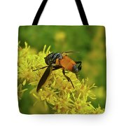 Feather-legged Fly On Goldenrod - Trichopoda Tote Bag