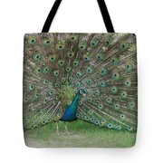Feathers On Display Tote Bag