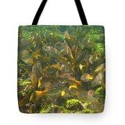 Feeding Frenzy Tote Bag