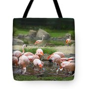 Feeding Frenzy Tote Bag