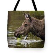 Feeding Moose Tote Bag