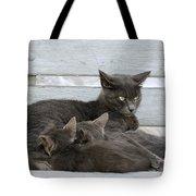 Feeding The Kittens Tote Bag