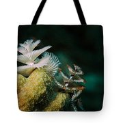 Feeding Worms Tote Bag