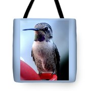 Female Anna With Purple Blue Throat Tote Bag