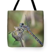 Female Blue Dasher In July  Tote Bag