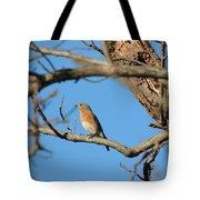 Female Bluebird Tote Bag
