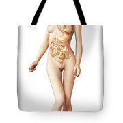 Female Body With Full Endocrine System Tote Bag