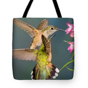 Female Broad-tailed Hummingbird Tote Bag
