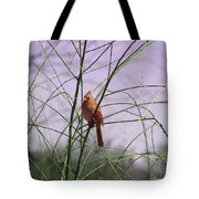 Female Cardinal In Willow Tote Bag