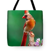 Female Cardinal Posing Pretty  Tote Bag