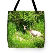 Female Deer Resting Tote Bag