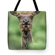 Female Elk Portrait Yellowstone National Park Wyoming Tote Bag