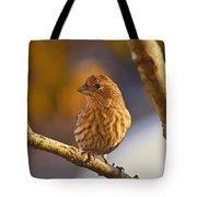 Female Housefinch Tote Bag