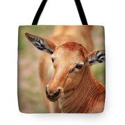 Female Impala Tote Bag