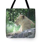 Female Lion On Guard Tote Bag