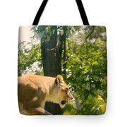 Female Lion On The Move Tote Bag