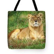 Female Lioness Lying On The Grass In The Afternoon Sun Tote Bag