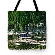 Female Mallard Duck Swimming Tote Bag