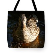 Female Mallard In Pond Tote Bag