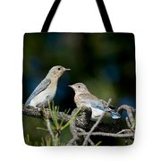 Female Mountain Bluebird With Fledgling Tote Bag