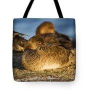 Female Readhead Duck Tote Bag