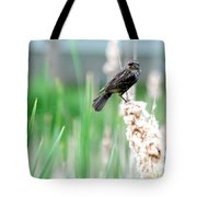 Female Red Winged Black Bird Tote Bag