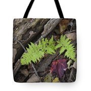 Fern And Maple Leaves Maine Img 6182 Tote Bag