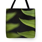 Fern Cyrtomium Fortunei Tote Bag
