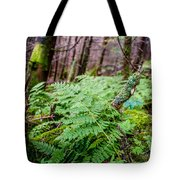 Fern In Forest Tote Bag